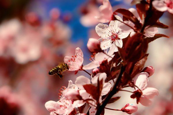 kwiaty-zdjecie-1